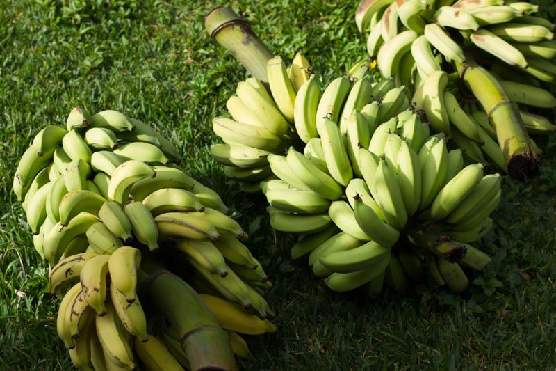 apple bananas