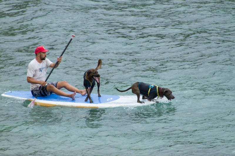 Rocky and the dogs at Turtle Bay