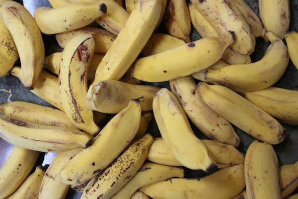 apple bananas from our property on oahu!