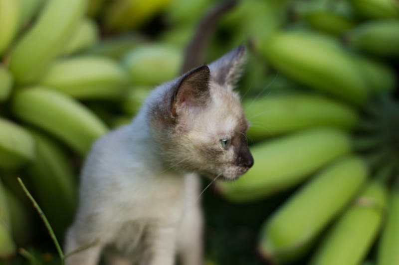 Coconut kitty