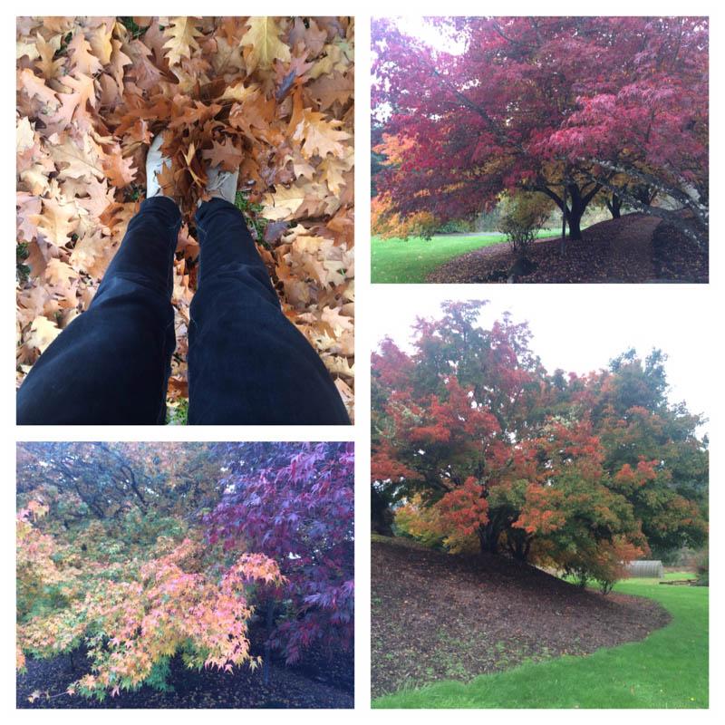 fall in Oregon